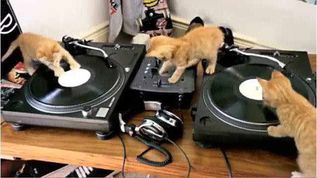 DJをする3匹の子ネコ! #cat