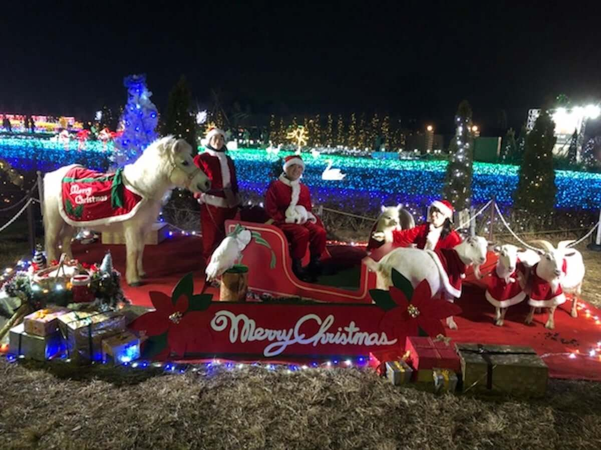 """白い動物と一緒に過ごす""""ホワイトクリスマス""""。動物園でクリスマスパーティーが開催決定 white-1200x900"""
