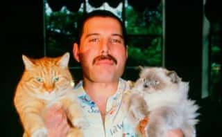 映画『ボヘミアン・ラプソディ』のTwitterで猫の日にちなんだ特別映像が公開に