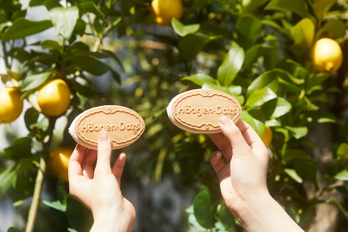 無料でハーゲンダッツ新商品を楽しめる「Häagen-Dazs Weekend Lemon Garden」が4月6日限定で東京・南青山にオープン! gourmet190328_haagendazs_10-1200x800