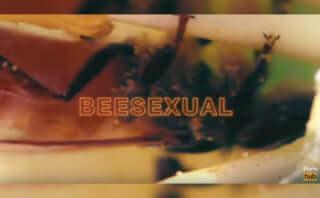 知る人ぞ知るアダルトサイトPornhub、新たなジャンル「BeeSexual」を発表|その中身とは一体?