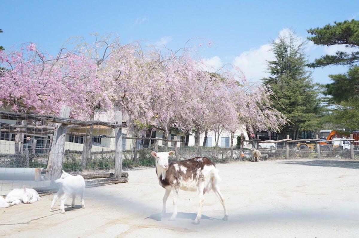 Qeticが選んだこのGW中に関東圏内で自然を感じれるスポット3選をお届け life190429_naturegw_2