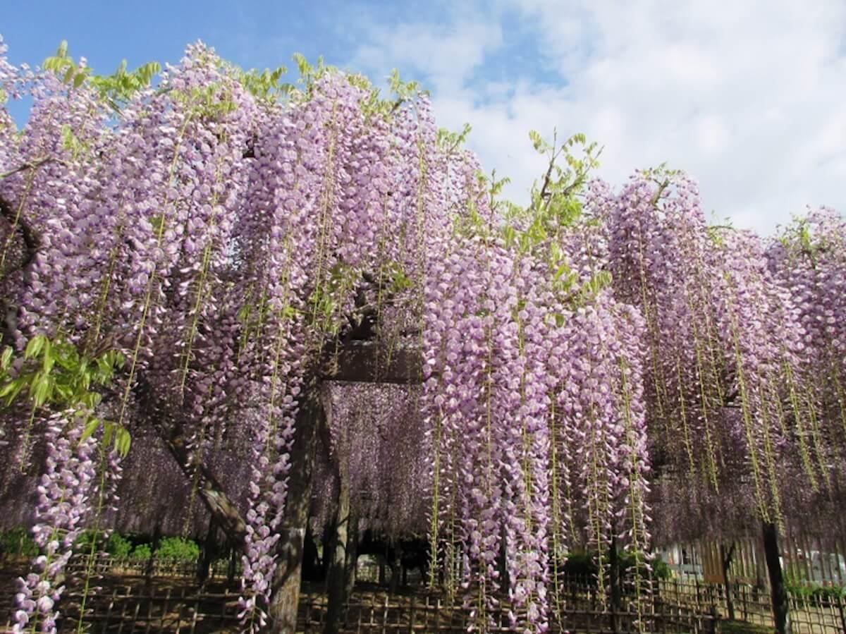 Qeticが選んだこのGW中に関東圏内で自然を感じれるスポット3選をお届け life190429_naturegw_4