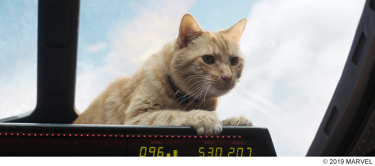 『キャプテン・マーベル』グースを演じた天才ネコに注目!レトロポップなボーナス映像が解禁 film190523_captainmarvel_2