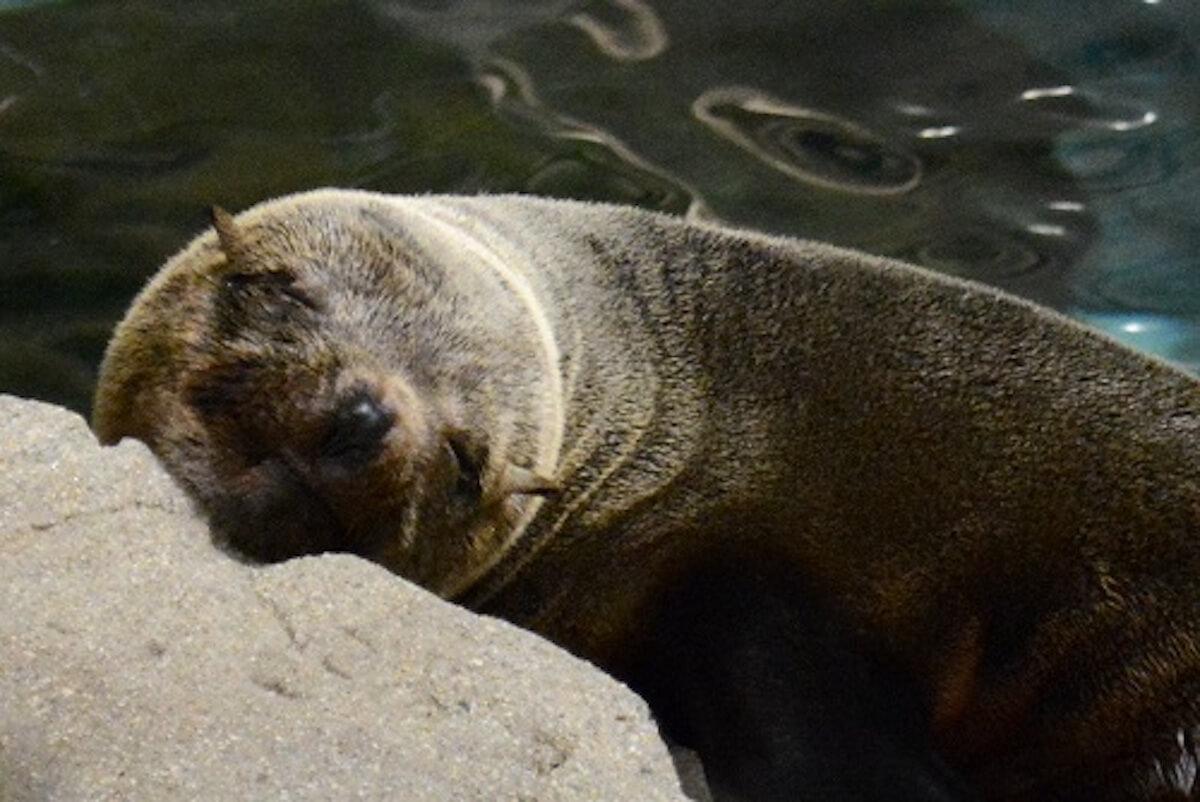 京都水族館で開催「夜のすいぞくかん」が超幻想的!スヤスヤ眠る動物たちに注目 life190610_yorunosuizokukan_3
