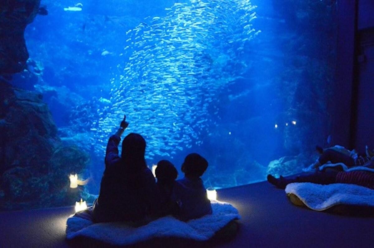 京都水族館で開催「夜のすいぞくかん」が超幻想的!スヤスヤ眠る動物たちに注目 life190610_yorunosuizokukan_4