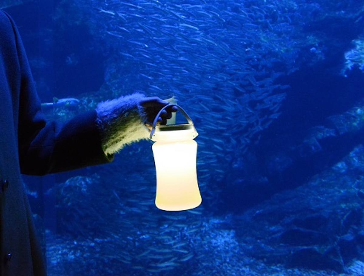 京都水族館で開催「夜のすいぞくかん」が超幻想的!スヤスヤ眠る動物たちに注目 life190610_yorunosuizokukan_8