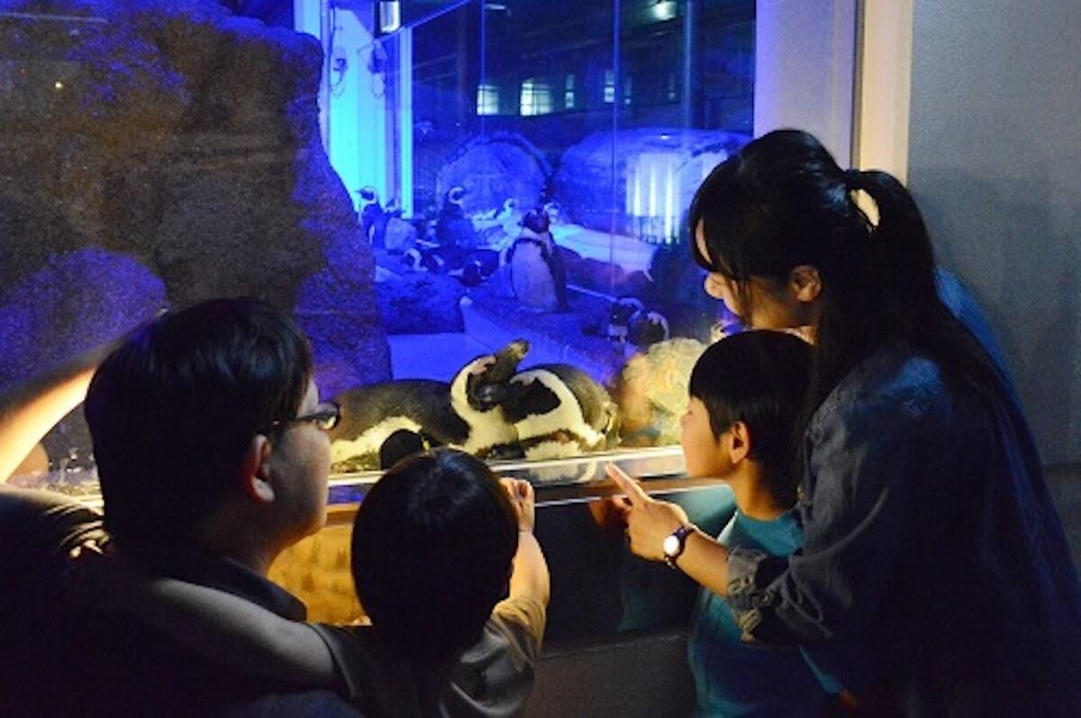 京都水族館で開催「夜のすいぞくかん」が超幻想的!スヤスヤ眠る動物たちに注目 life190610_yorunosuizokukan_7