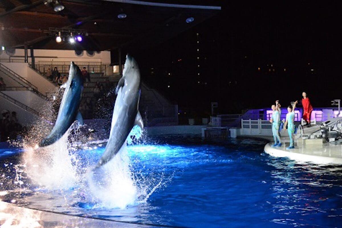 京都水族館で開催「夜のすいぞくかん」が超幻想的!スヤスヤ眠る動物たちに注目 life190610_yorunosuizokukan_2