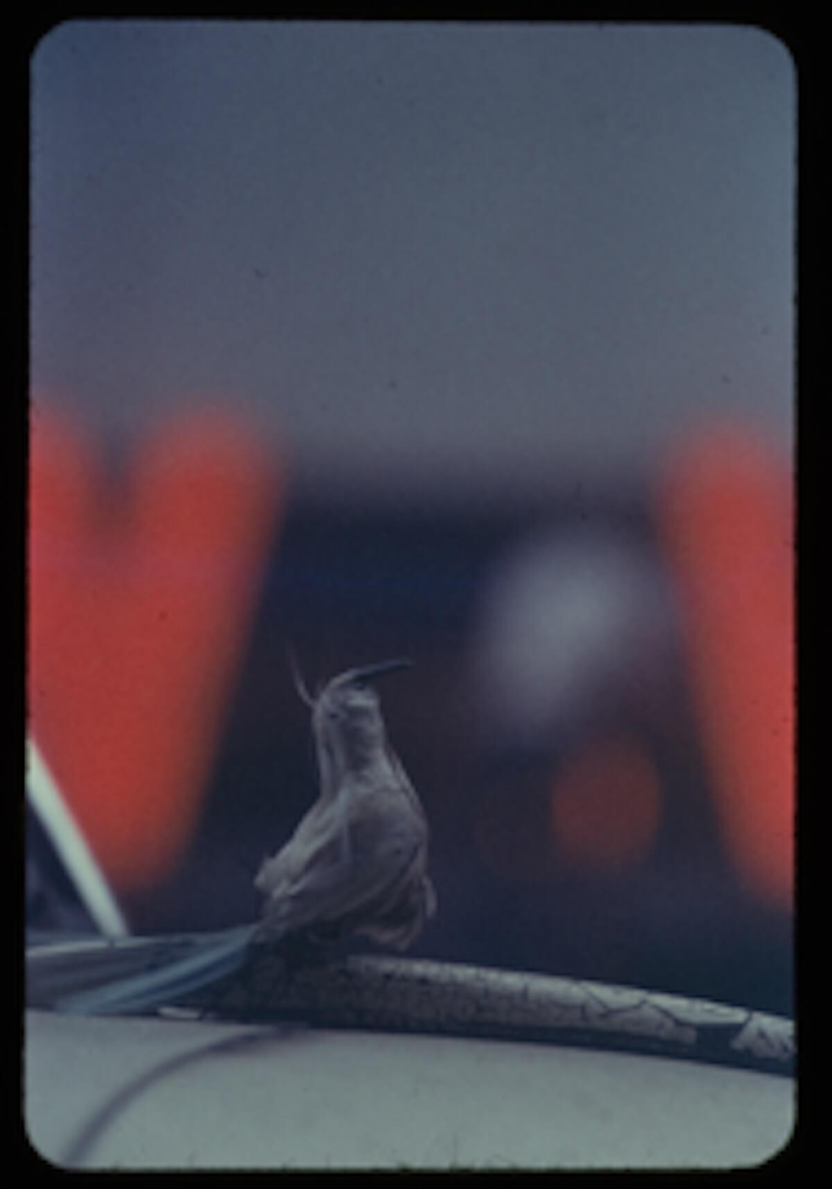 一昨年大盛況に終わった写真展が再び!<ニューヨークが生んだ伝説の写真家 永遠のソール・ライター>開催決定 art190616_saulleiter_5