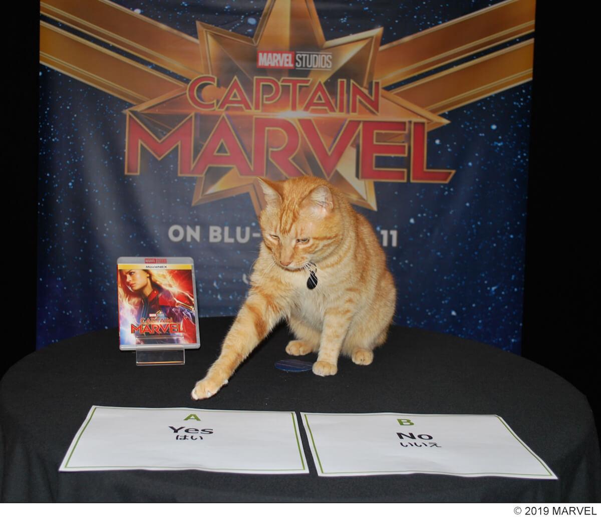 グースが好きなのはニック・フューリー!?『キャプテン・マーベル』の大人気ネコ、レジーのインタビュー映像が解禁 video190620_captainmarvel_reggie_1
