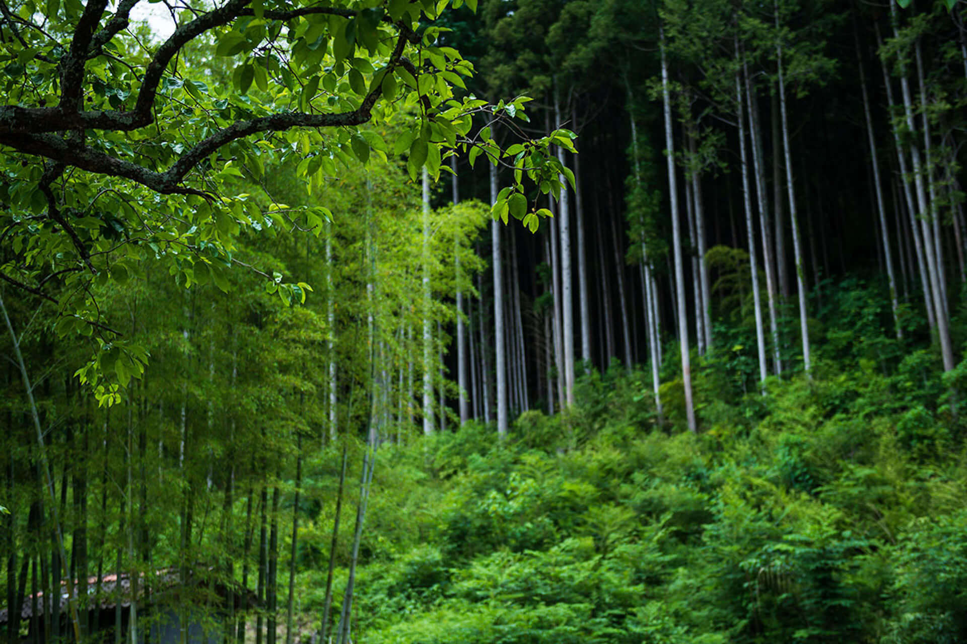 """「日本で最も美しい村」、日本の秘境に古民家ラグジュアリーホテル""""ゼナギ""""がOPEN! 2-1920x1280"""
