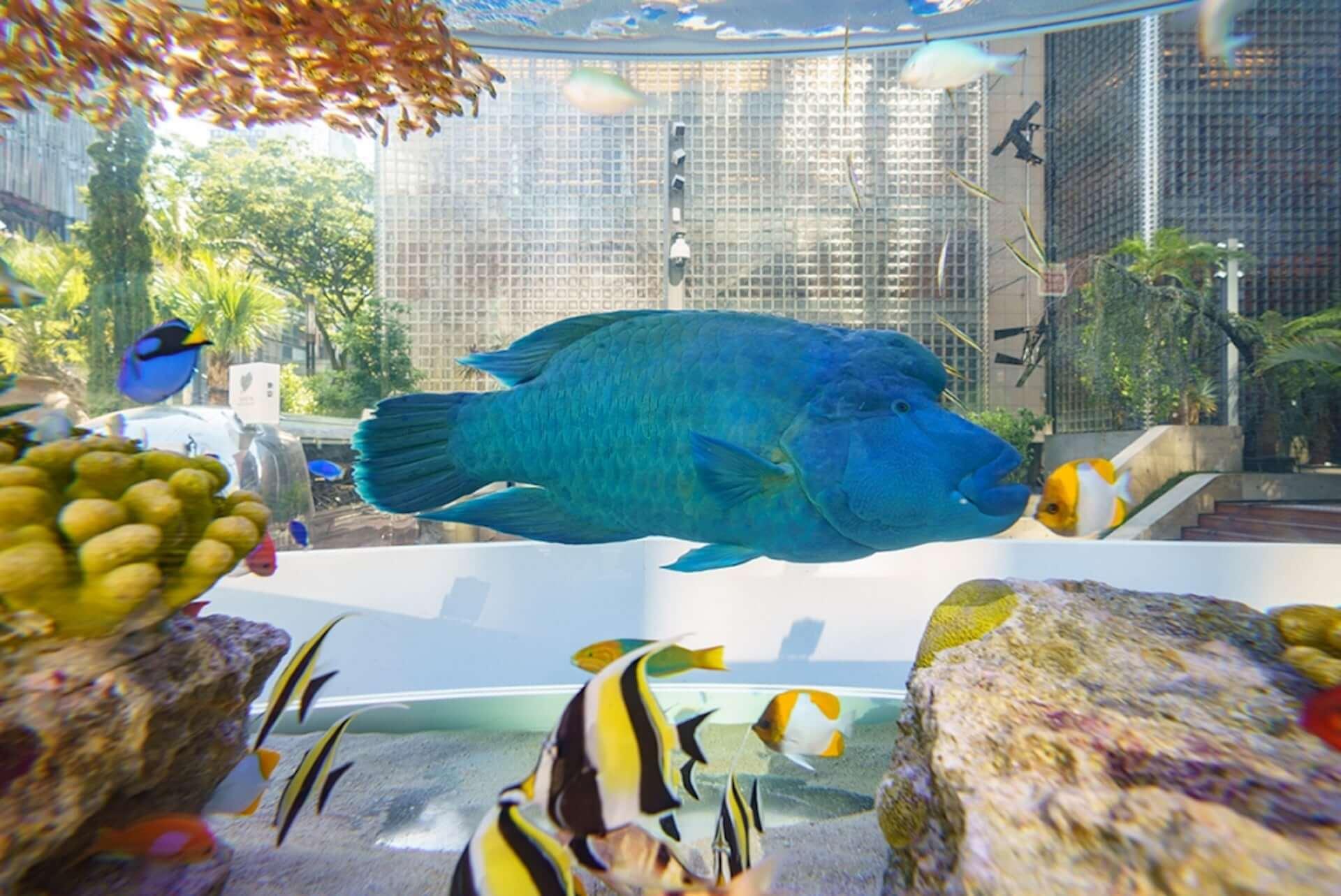 都会の中心に美ら海のお魚27種類約1,000匹が集まる!Ginza Sony Parkにて2つの新プロジェクトがスタート lifefashion190801ginza-sony-park_2-1920x1283