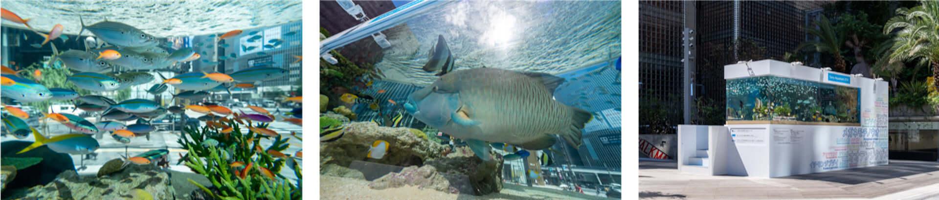 都会の中心に美ら海のお魚27種類約1,000匹が集まる!Ginza Sony Parkにて2つの新プロジェクトがスタート lifefashion190801ginza-sony-park_13-1920x410