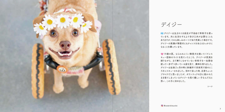 人とペットが共生できる社会へ|写真集『みんなイヌ、みんなネコ』発売!写真展も開催 sub2-4-1440x719