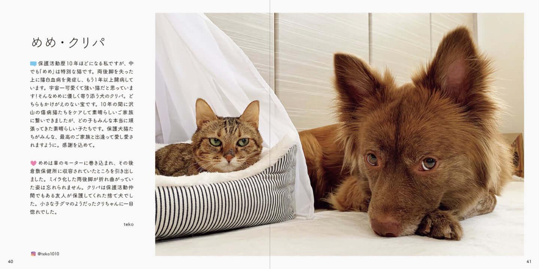 人とペットが共生できる社会へ|写真集『みんなイヌ、みんなネコ』発売!写真展も開催 sub4-4-1440x719