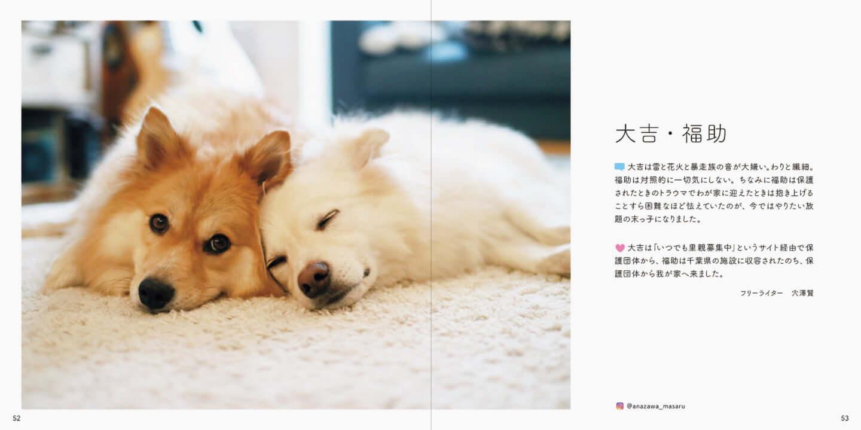 人とペットが共生できる社会へ|写真集『みんなイヌ、みんなネコ』発売!写真展も開催 sub5-3-1440x719