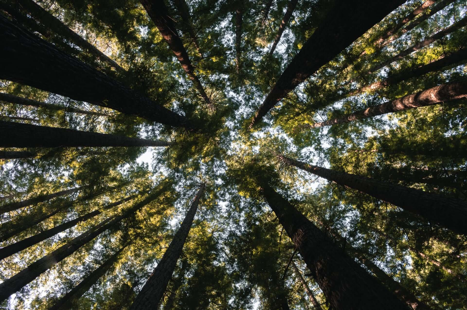 Apple CEOティム・クック、アマゾン熱帯雨林の火災を受けて寄付を宣言|ディカプリオらも寄付 tech190827_apple_amazon_main-1920x1277