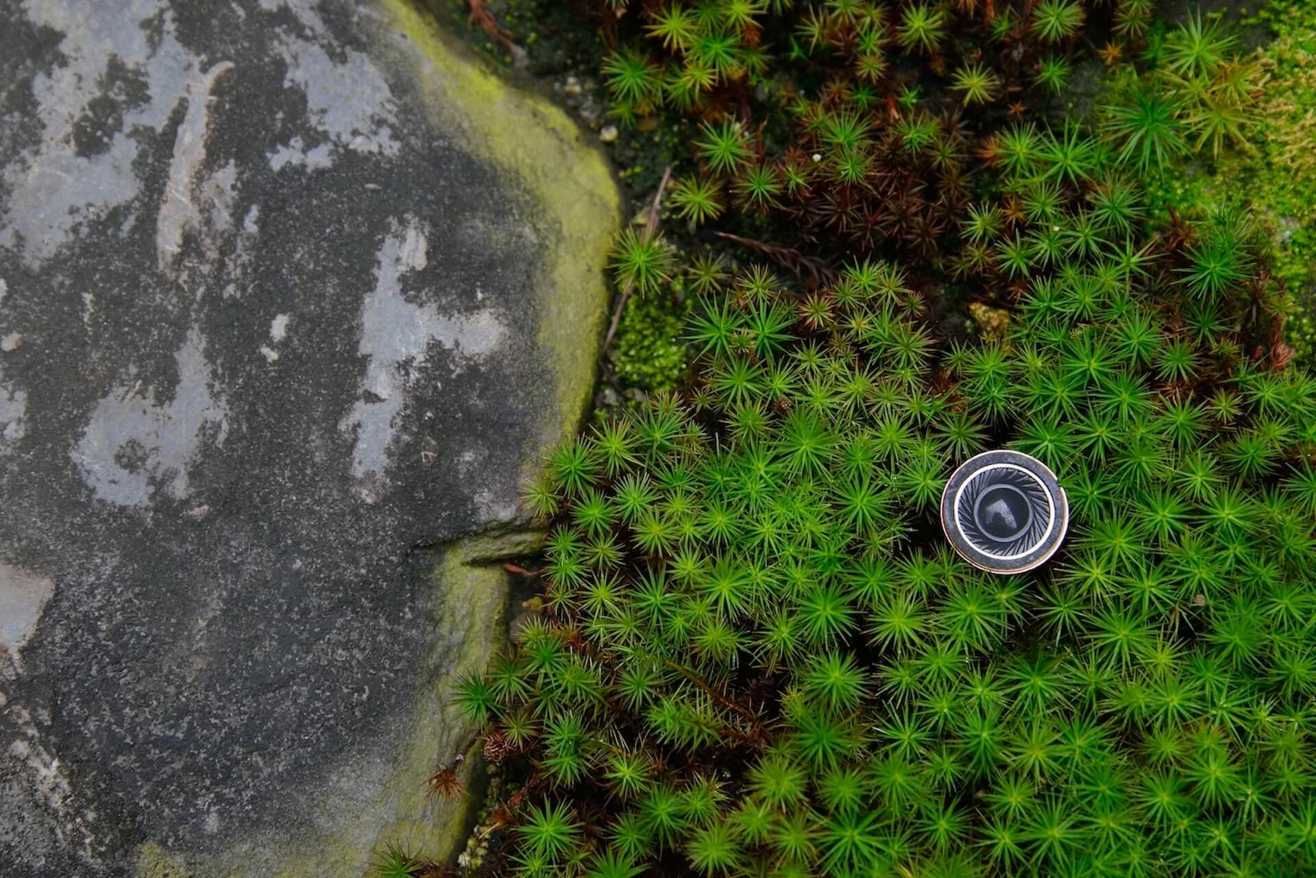 伝統的な庭園に拡がるサウンドスケープ<yadorine/宿り音>レポート&作家及川潤耶インタビュー art191225_yadorine_3