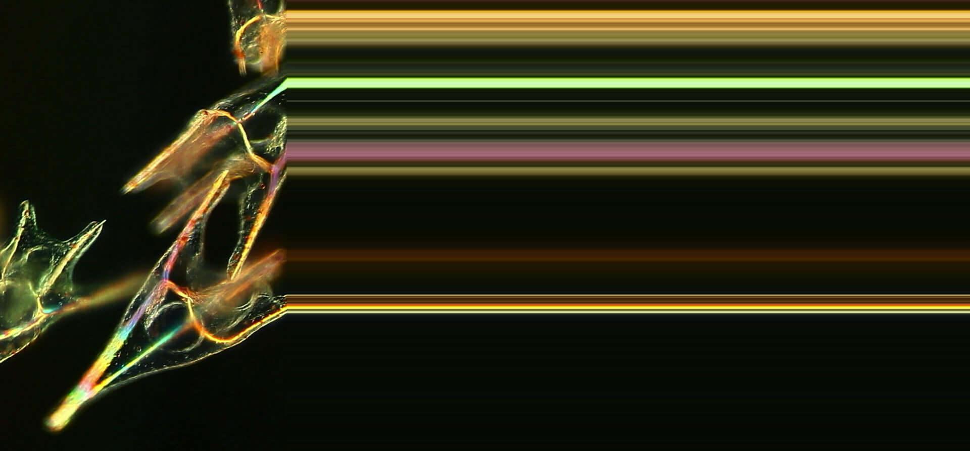 坂本龍一との共演でも知られるダムタイプのメンバー・高谷史郎の初ドキュメンタリー映画『DUMB TYPE 高谷史郎ー自然とテクノロジーのはざま』の劇場公開が決定 film200217_shirotakatani_7-1920x894