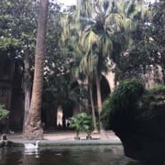 バルセロナの静かな庭
