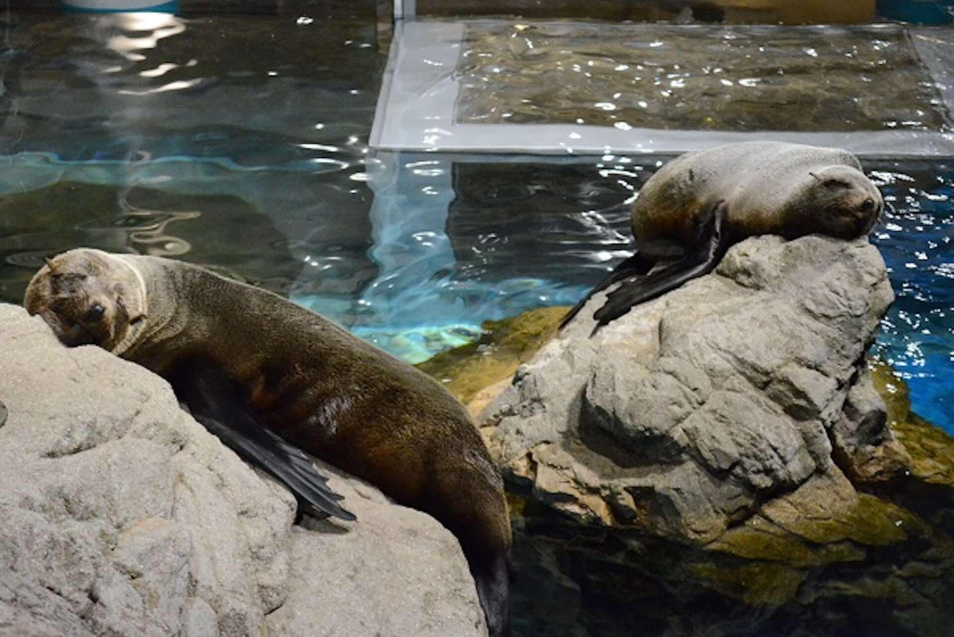 夏休みは京都水族館へ!夜限定イベント<夜のすいぞくかん>が今年も開催決定|イルカの新パフォーマンスも art200713_kyoto-aquarium_1-1920x1283
