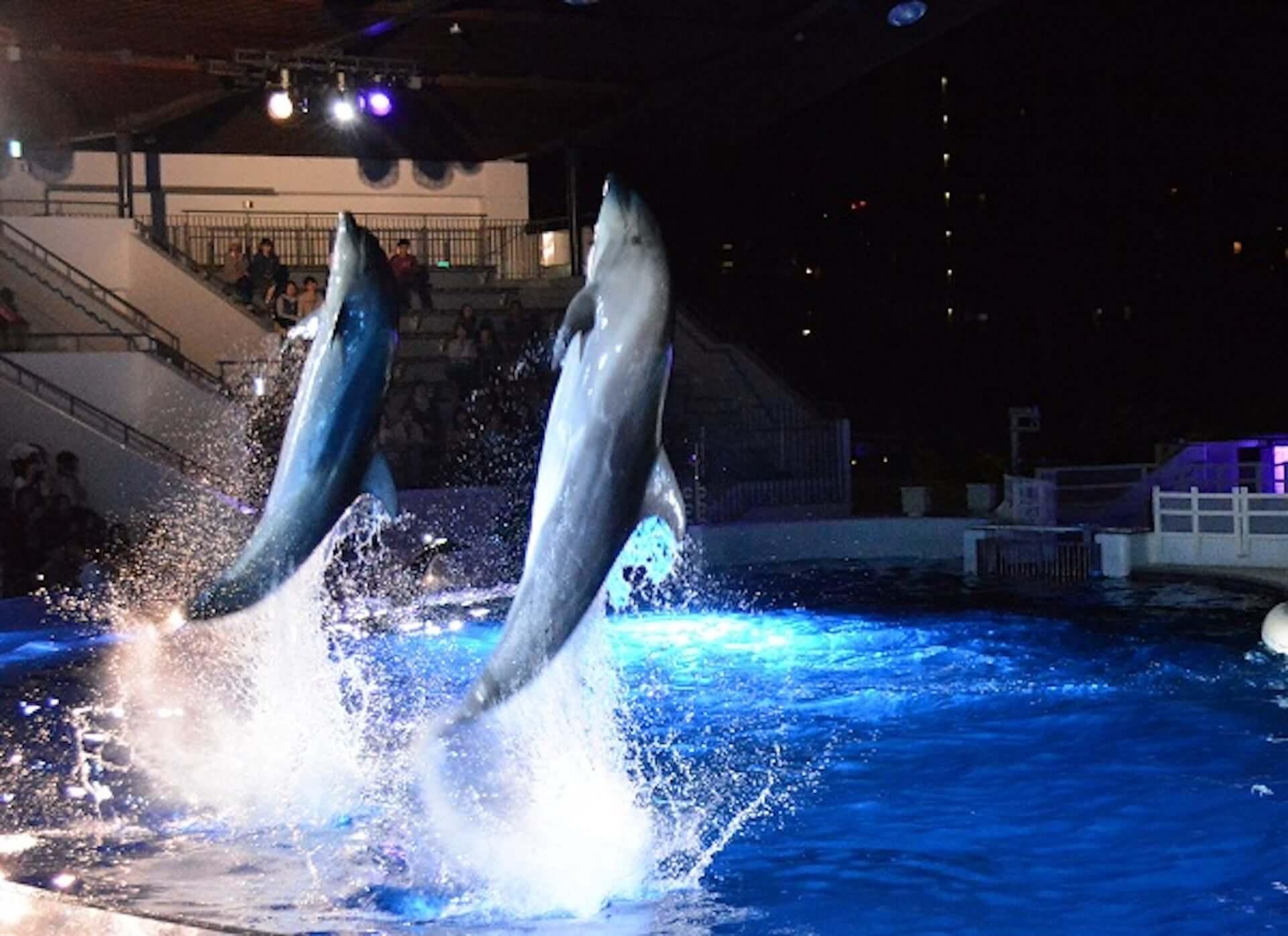夏休みは京都水族館へ!夜限定イベント<夜のすいぞくかん>が今年も開催決定|イルカの新パフォーマンスも art200713_kyoto-aquarium_2-1920x1395