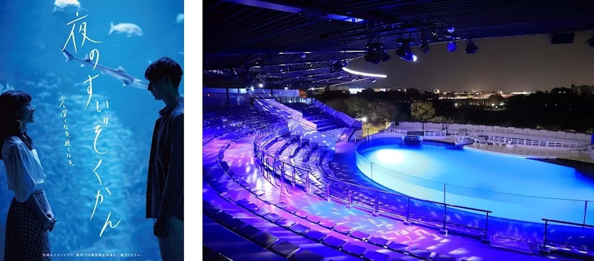 夏休みは京都水族館へ!夜限定イベント<夜のすいぞくかん>が今年も開催決定|イルカの新パフォーマンスも art200713_kyoto-aquarium_3-1920x844