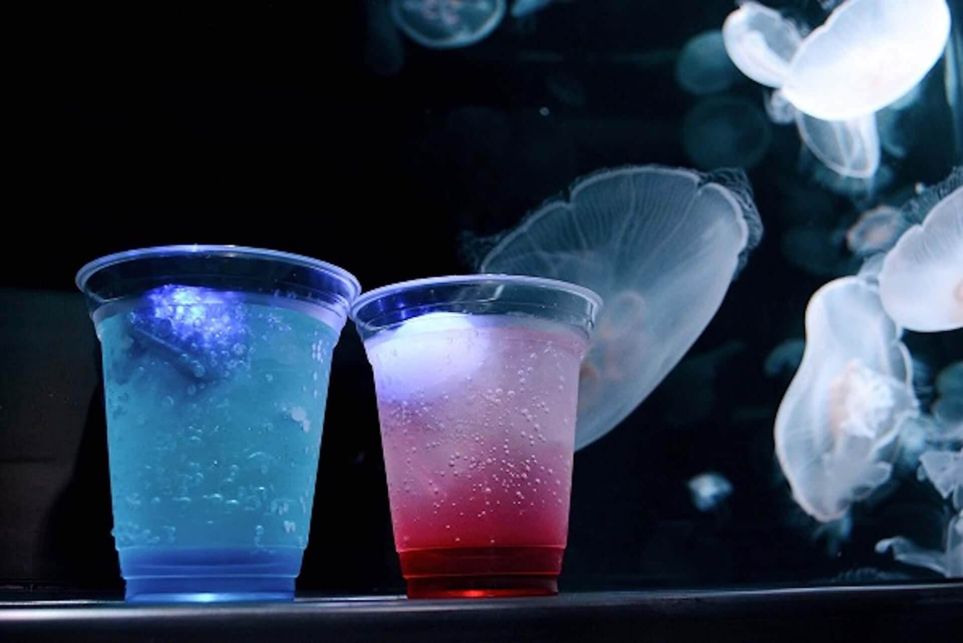 夏休みは京都水族館へ!夜限定イベント<夜のすいぞくかん>が今年も開催決定|イルカの新パフォーマンスも art200713_kyoto-aquarium_4-1920x1283
