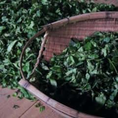 First Essence Tea Leaf Gin