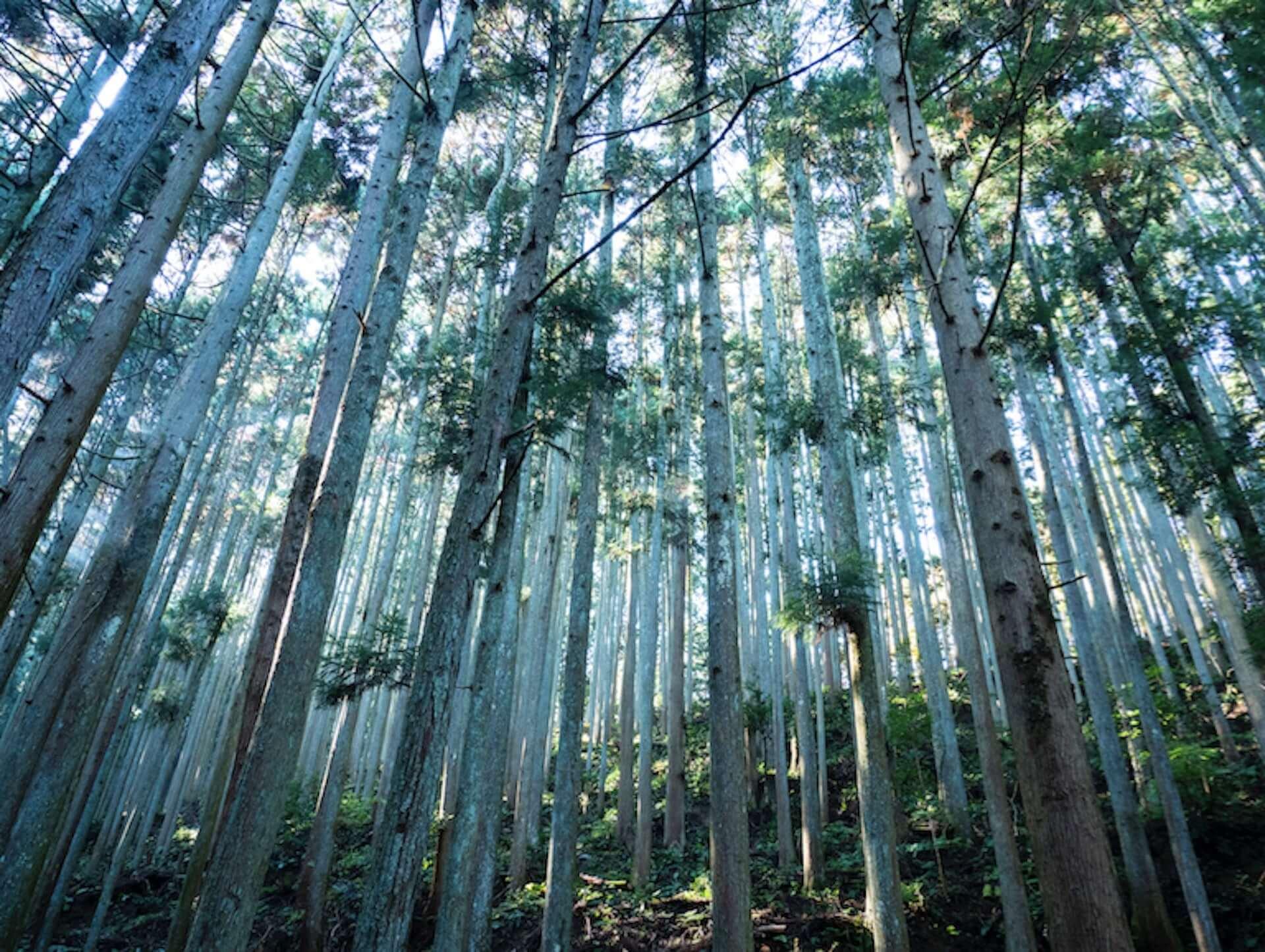奈良県で新たなアート体験を!齋藤精一がプロデュースする芸術祭<MIND TRAIL 奥大和 心のなかの美術館>が開催決定 art200827_nara-mindtrail_5-1920x1445