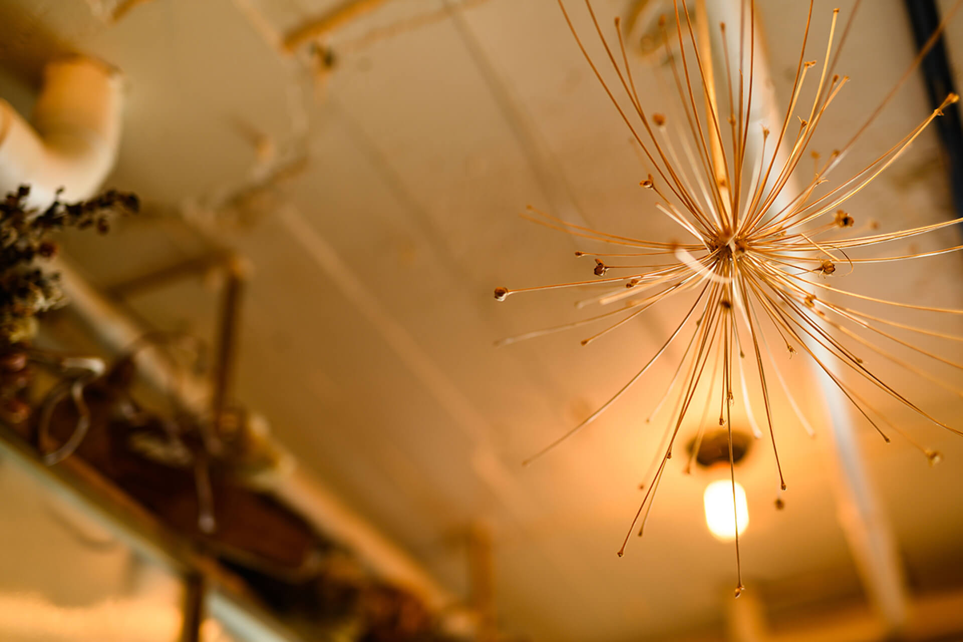 代々木上原の人気レストラン『sio』のオーナーシェフ鳥羽周作氏が語る、料理業界にかける熱い思い gourmet201119_mondoalfa_sio_2
