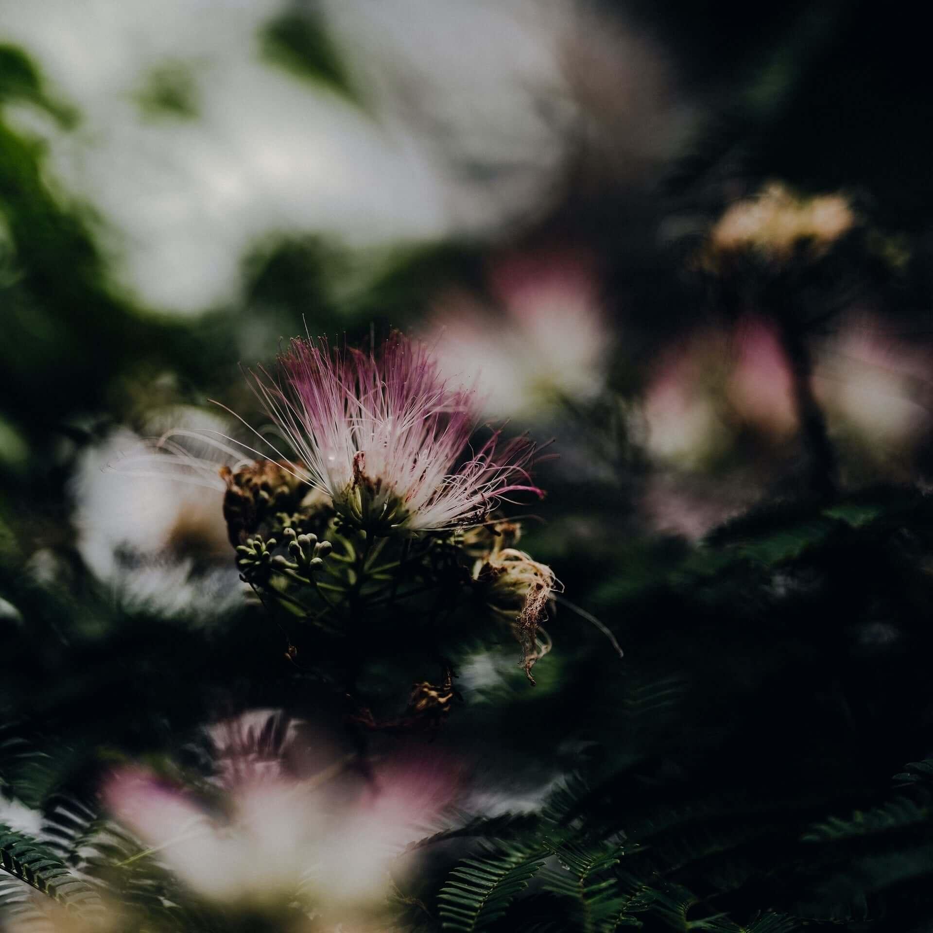 """北里彰久の新曲""""In Bloom""""がリリース&限定ロングTシャツが発売!MV監督はVIDEOTAPEMUSIC music201118_akihisa-kitazato_3-1920x1920"""