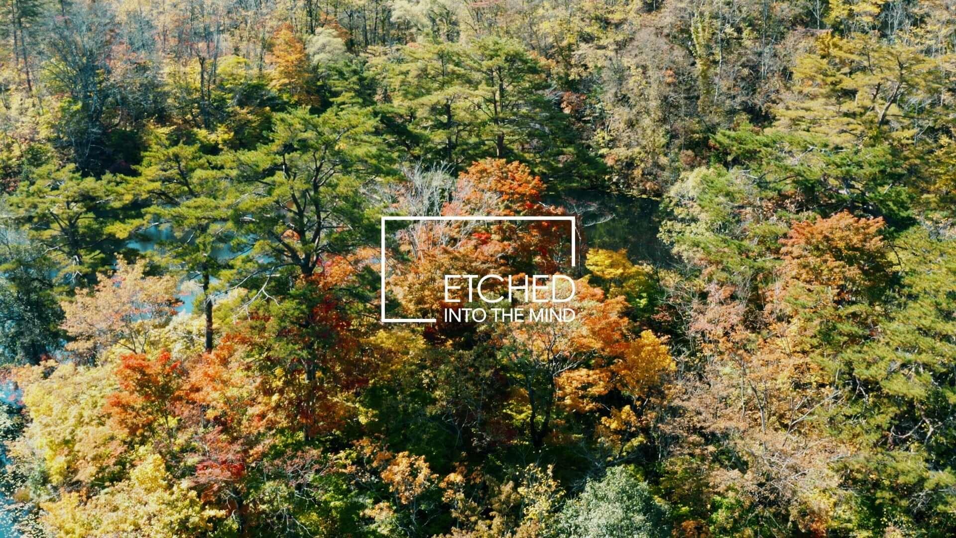 日本の風景&音楽を発信するアートプロジェクト「ETCHED」にSakura Tsurutaが登場!4Kのライブ映像が無料公開 music201120_etched_1-1920x1080