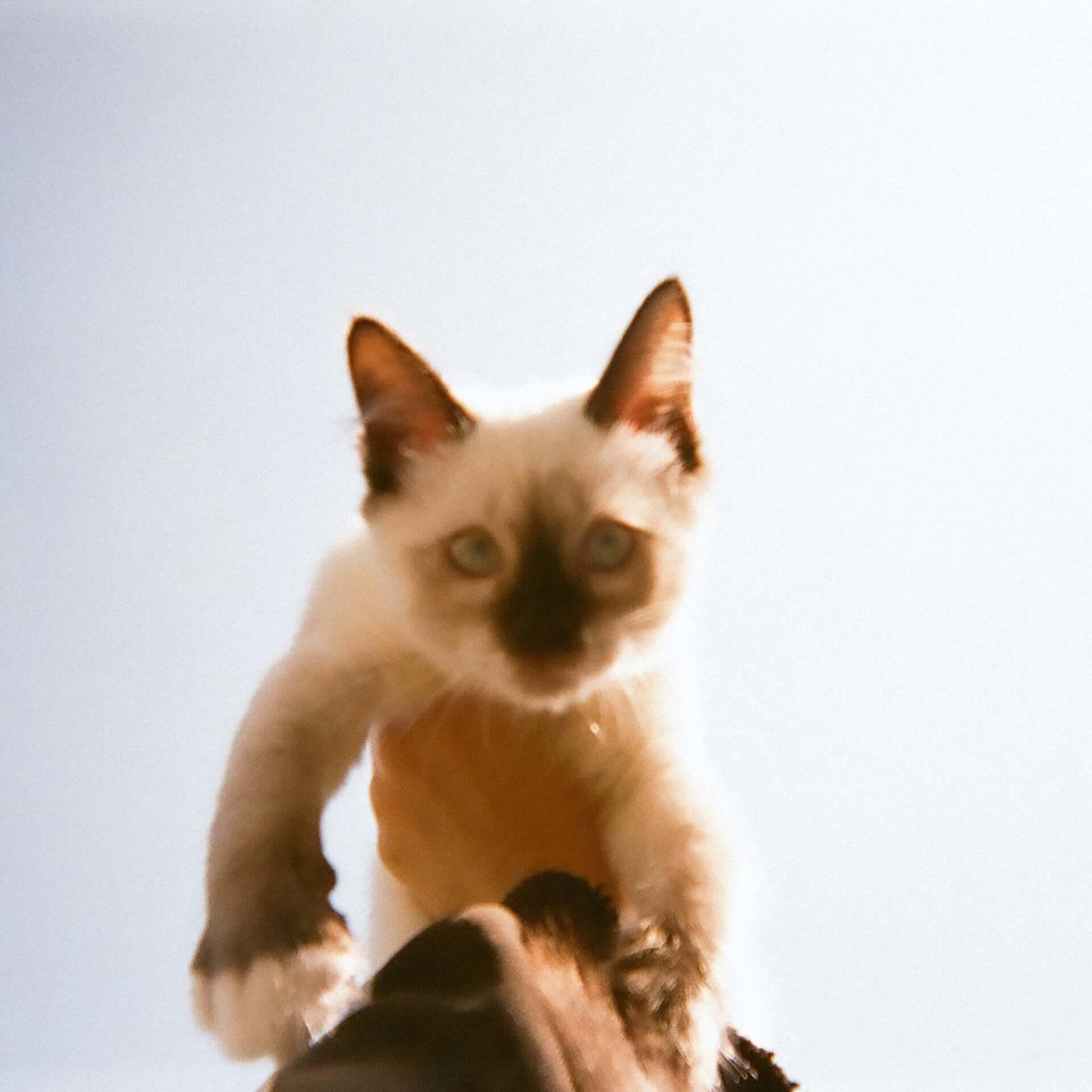 """カネコアヤノが配信シングル""""腕の中でしか眠れない猫のように""""をリリース!演奏には林宏敏、本村拓磨、Bobが参加 music201125_kanekoayano_2-1920x1920"""