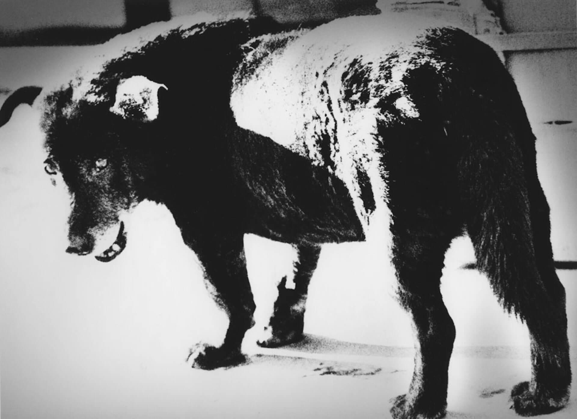 森山大道ドキュメンタリー映画『過去はいつも新しく、未来はつねに懐かしい 写真家 森山大道』菅田将暉ナレーションによる本予告編が解禁 film201203_moriyama_daido_09