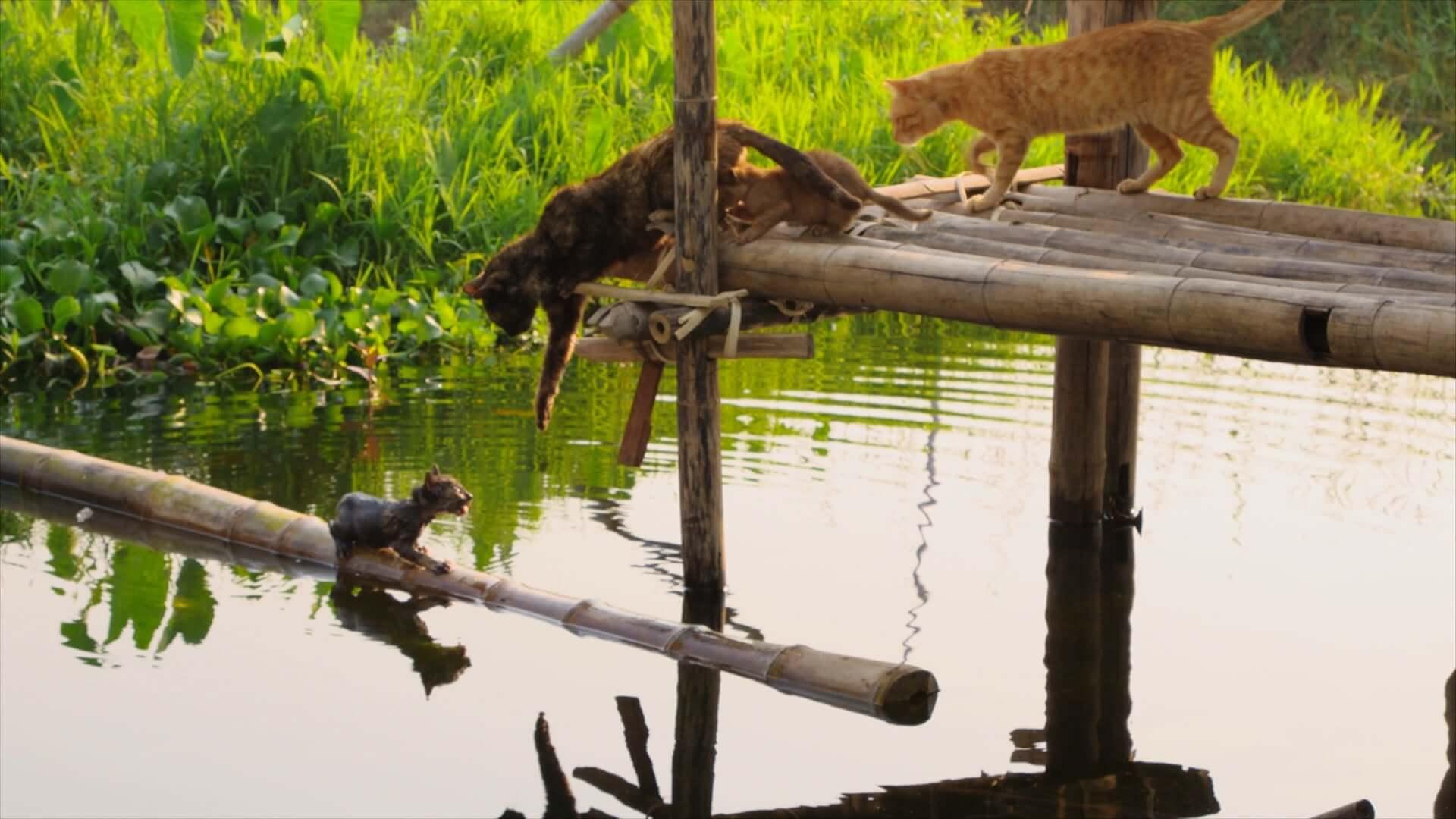 湖上で暮らす子ネコに初めての試練が!岩合光昭監督作『劇場版 岩合光昭の世界ネコ歩き あるがままに、水と大地のネコ家族』本編映像が解禁 film201222_sekainekoaruki_2-1920x1080